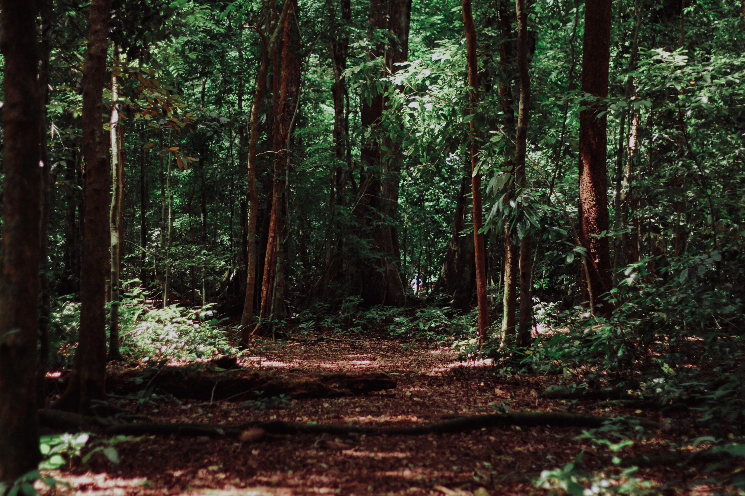 metsämaa